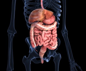 Human inner organs in X-ray